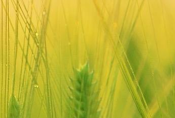 Processus : méditer la poussée des plantes